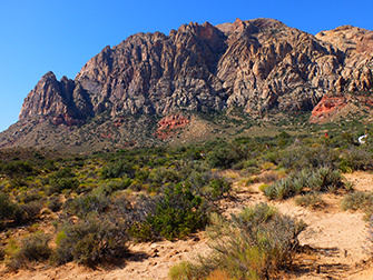 Equitazione in Red Rock Canyon a Las Vegas - Flora e Fauna