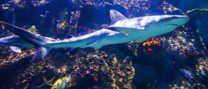 Shark Reef Aquarium a Las Vegas